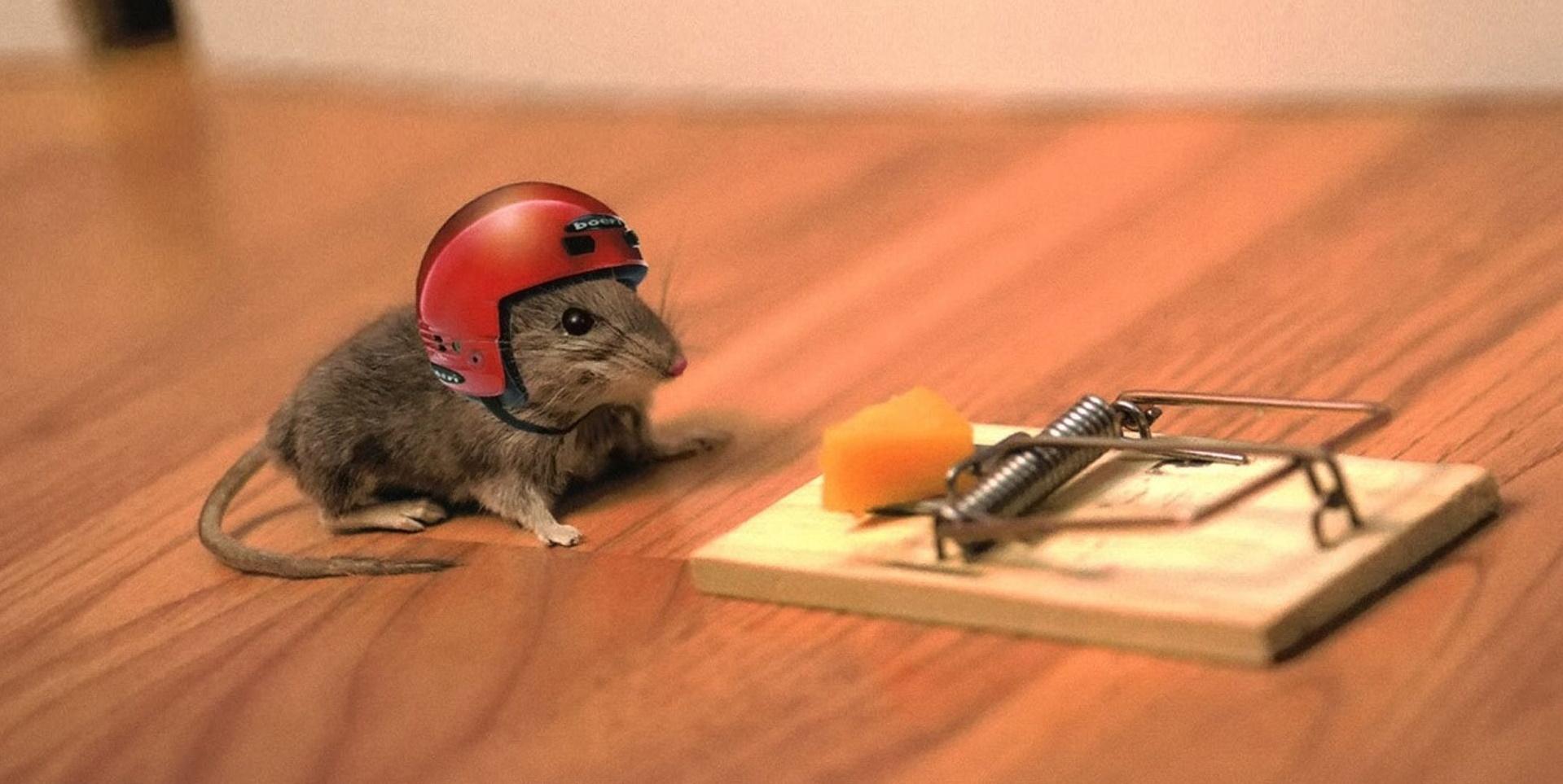 als poes van huis is dansen de muizen op tafel, Gartenarbeit ideen