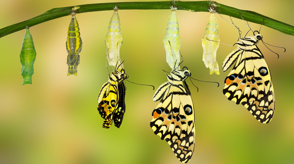 Butterfly transformation is similar to the approach for a digital project - small defined steps