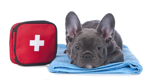 Animal First Aid and Emergency Triage for Veterinary Support Staff, Accredited CPD.
