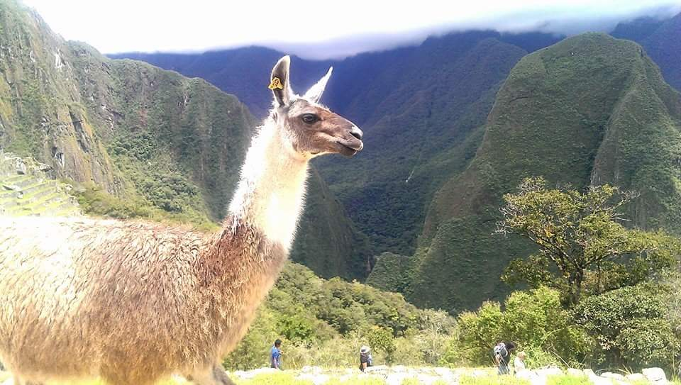 Peruvian Adventures