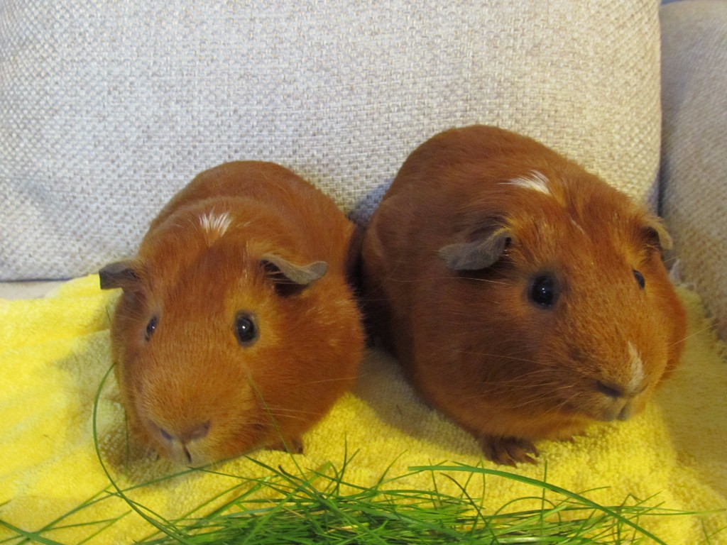 Treacle (was Toffee) & Peanut April 19th 2015