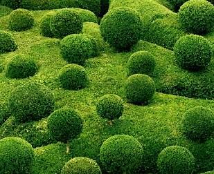 En savoir  plus sur notre service jardinage.