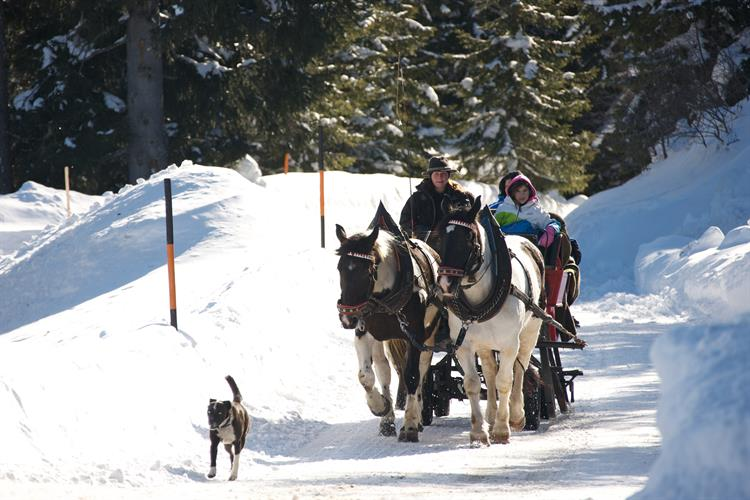 winter horse drawn sleigh with dog