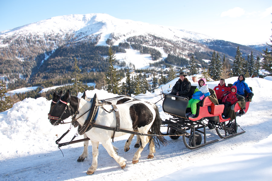 Winter horse drawn sleigh
