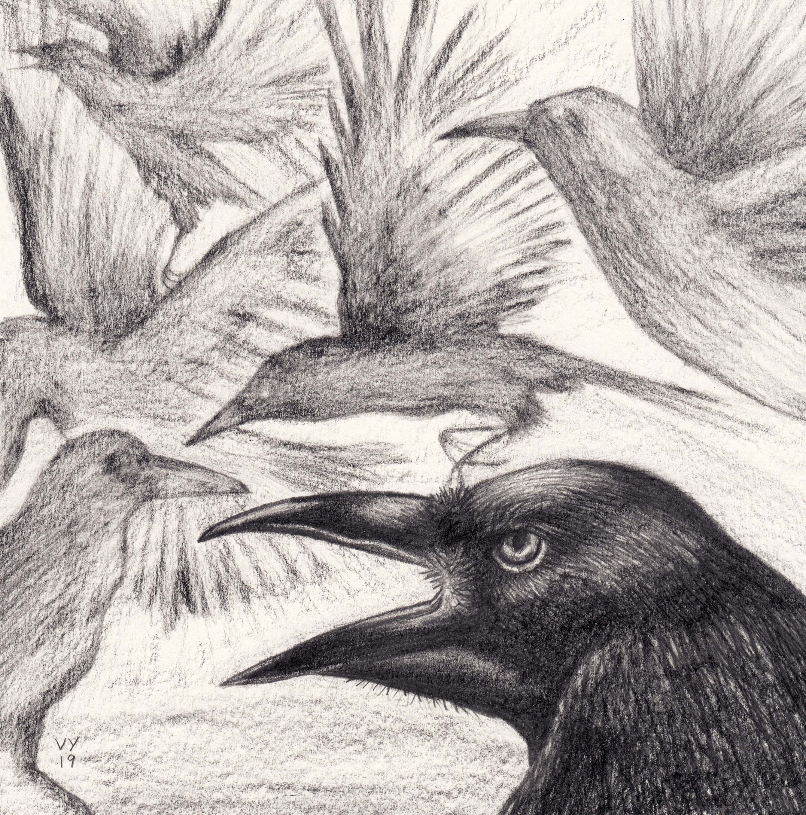 'Who Crows there?' pencil drawing