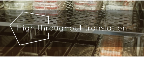 high throughput translationpng
