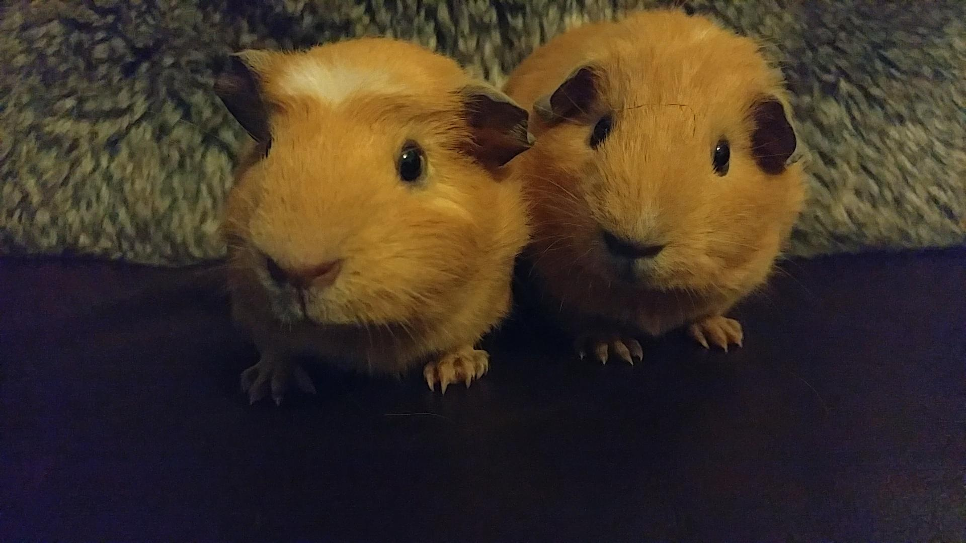 Sonic & Abbie (were Link & Squidge) April 7th 2018