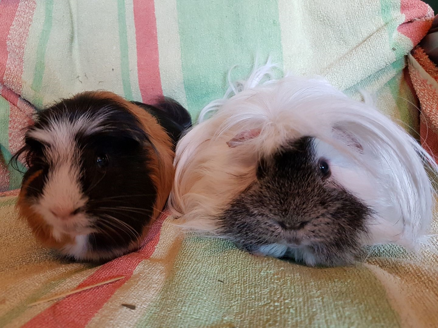 Bubble & Percy April 22nd 2018