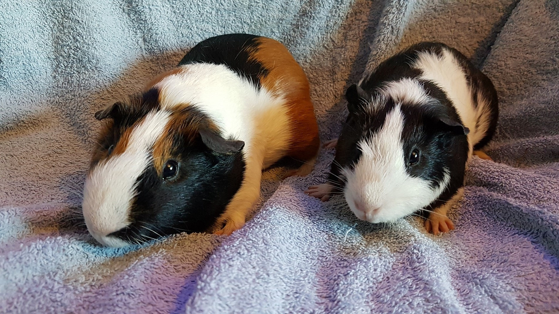 Harry & Sirius (were Spot & Oreo) June 19th 2019