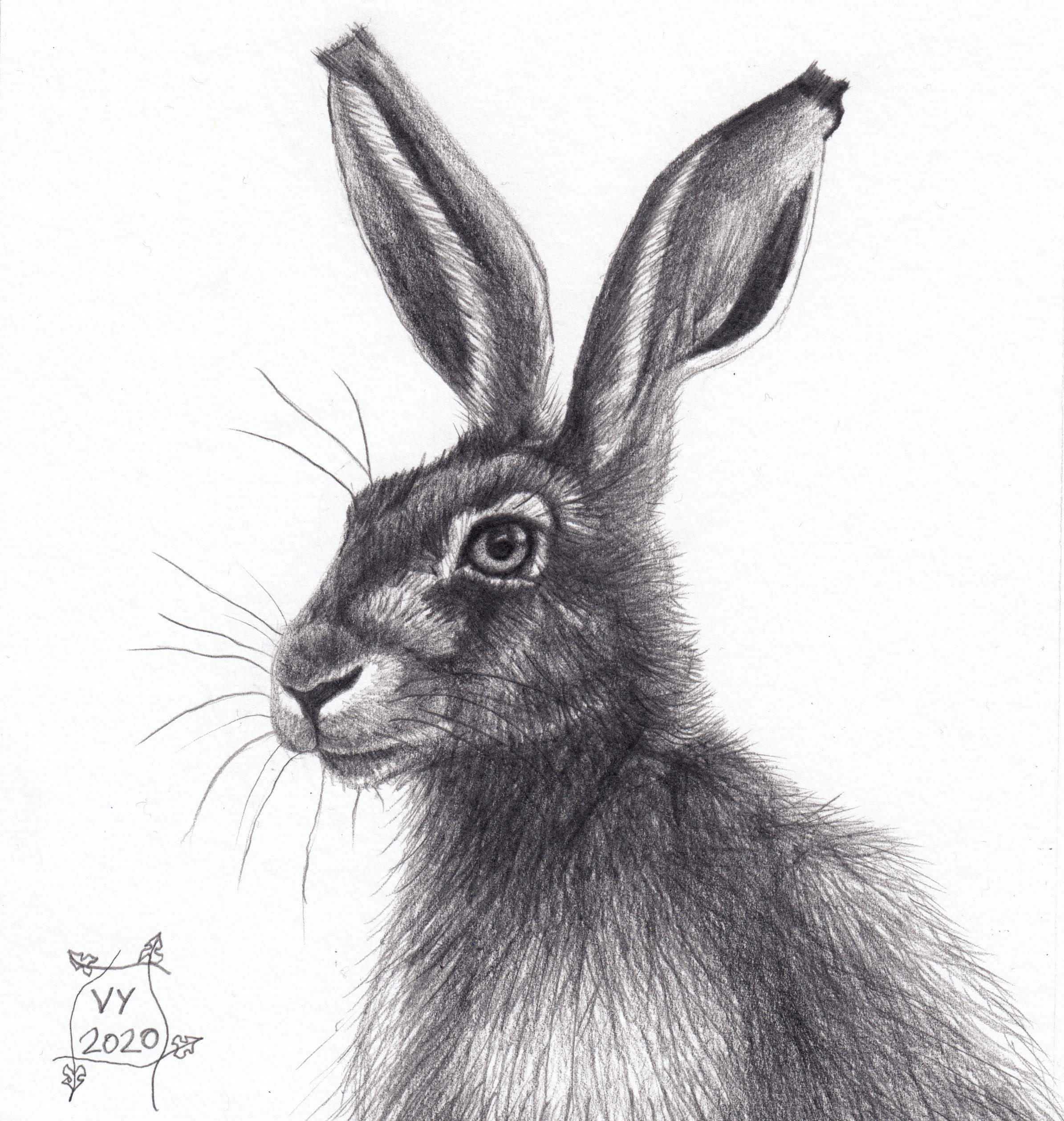 Hare pencil drawing number 2