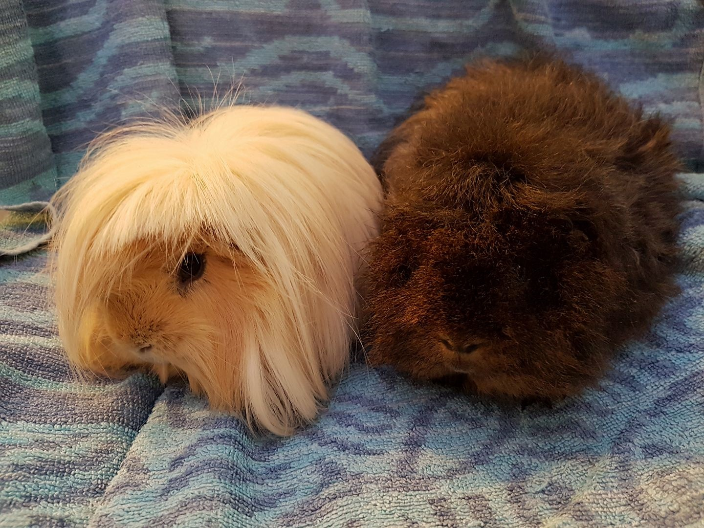 Si & Dave (were Fluffy & Dexter) February 4th 2018