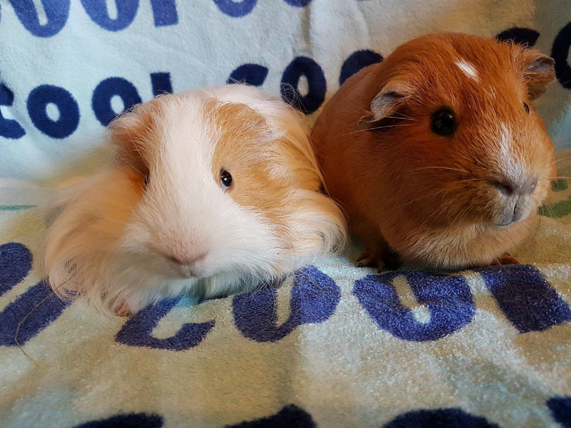 Biscuit & Fudge (were Milo & Hector) Feb 25th 2017