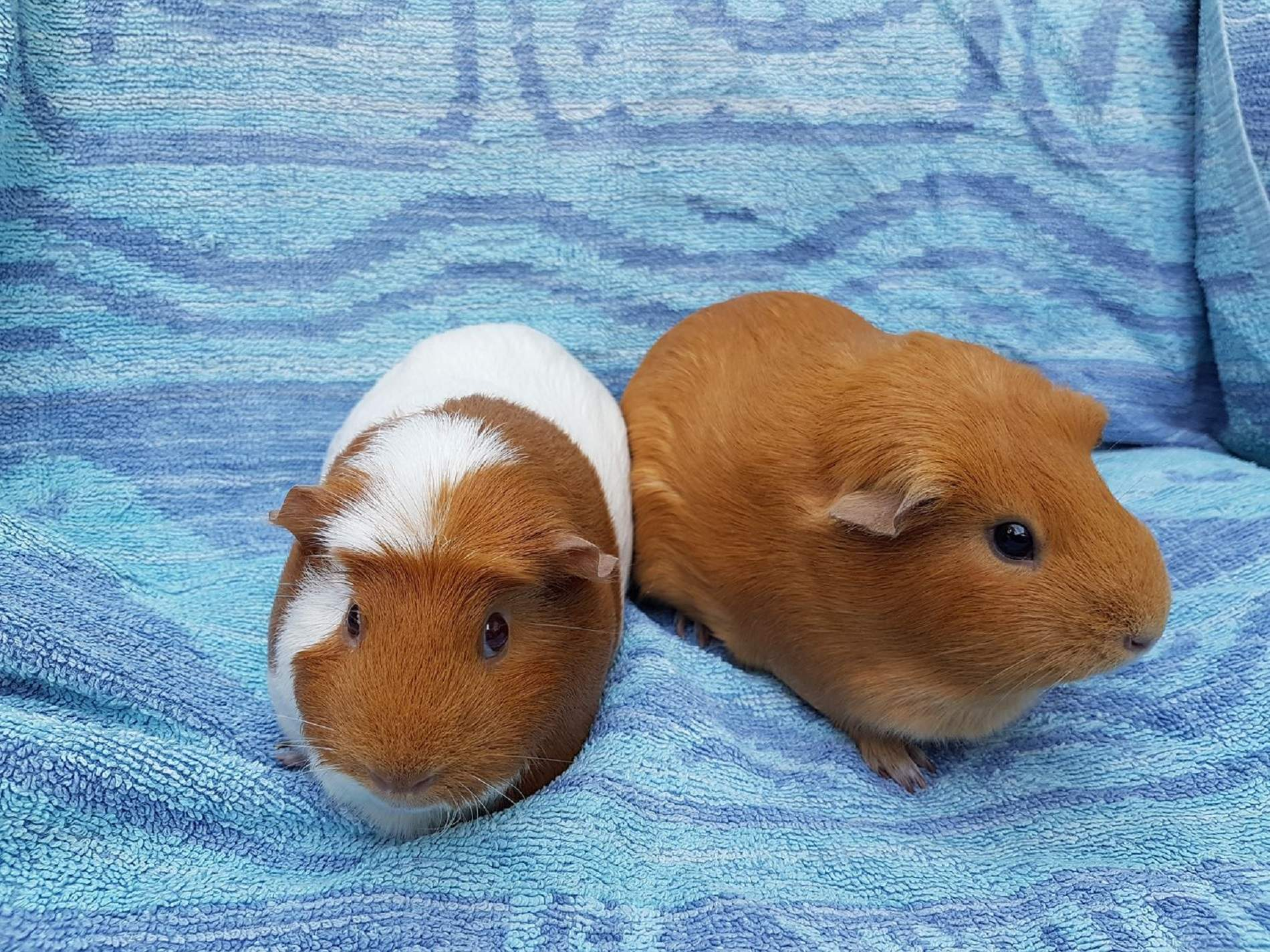 Daisy & Poppy May 19th 2018