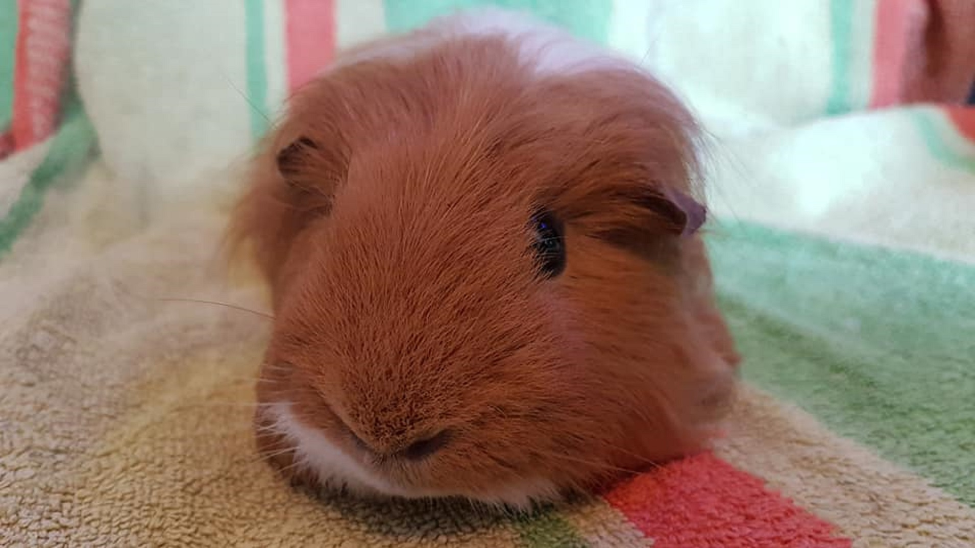 Ginger (was Biscuit) October 14th 2018