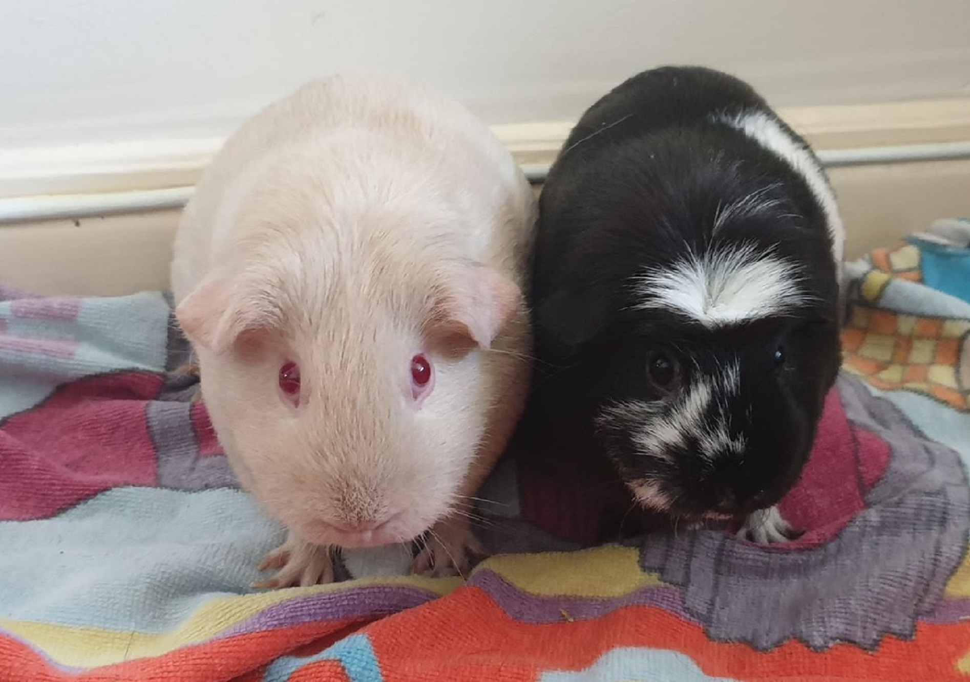 Belle & Moo October 19th 2019