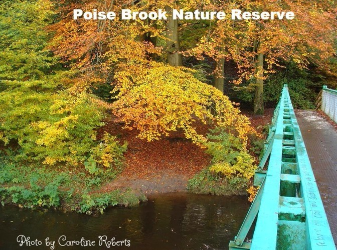 Poise Brook Nature Reserve