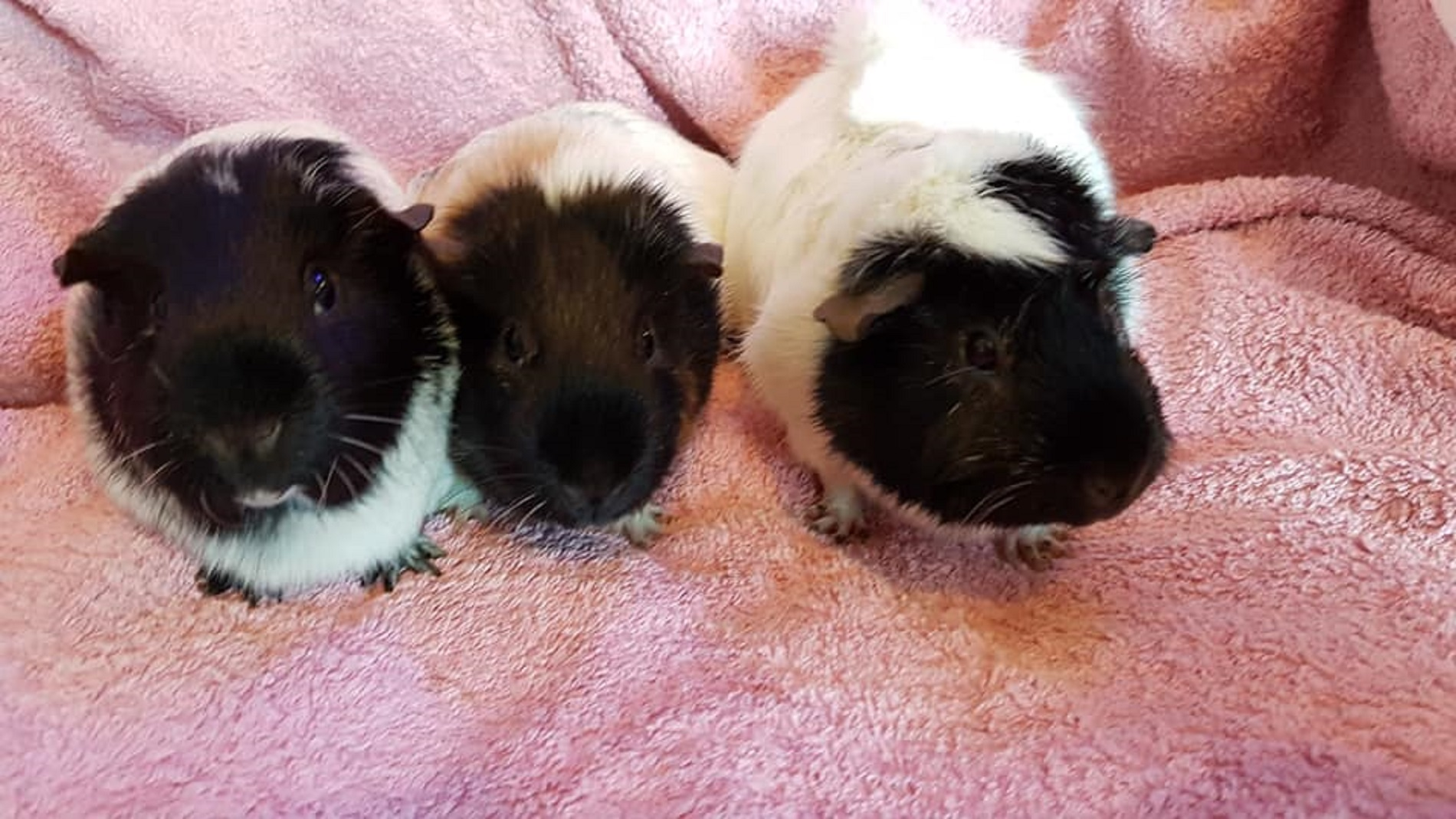 Daisy, Poppy & Rosie July 7th 2019