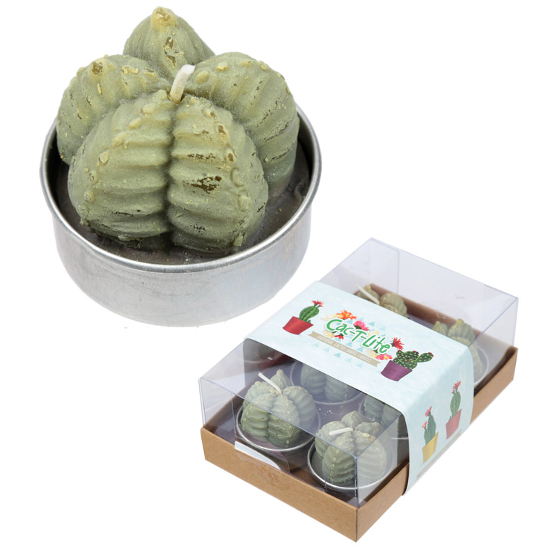 Cactus gift set offer