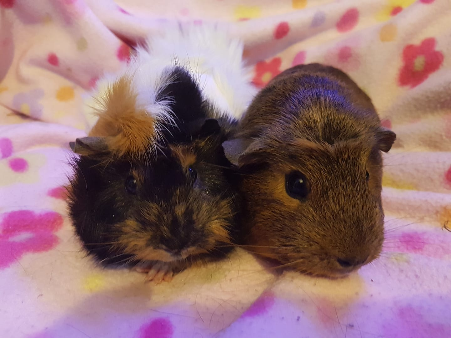 Dolly & Petunia June 16th 2018
