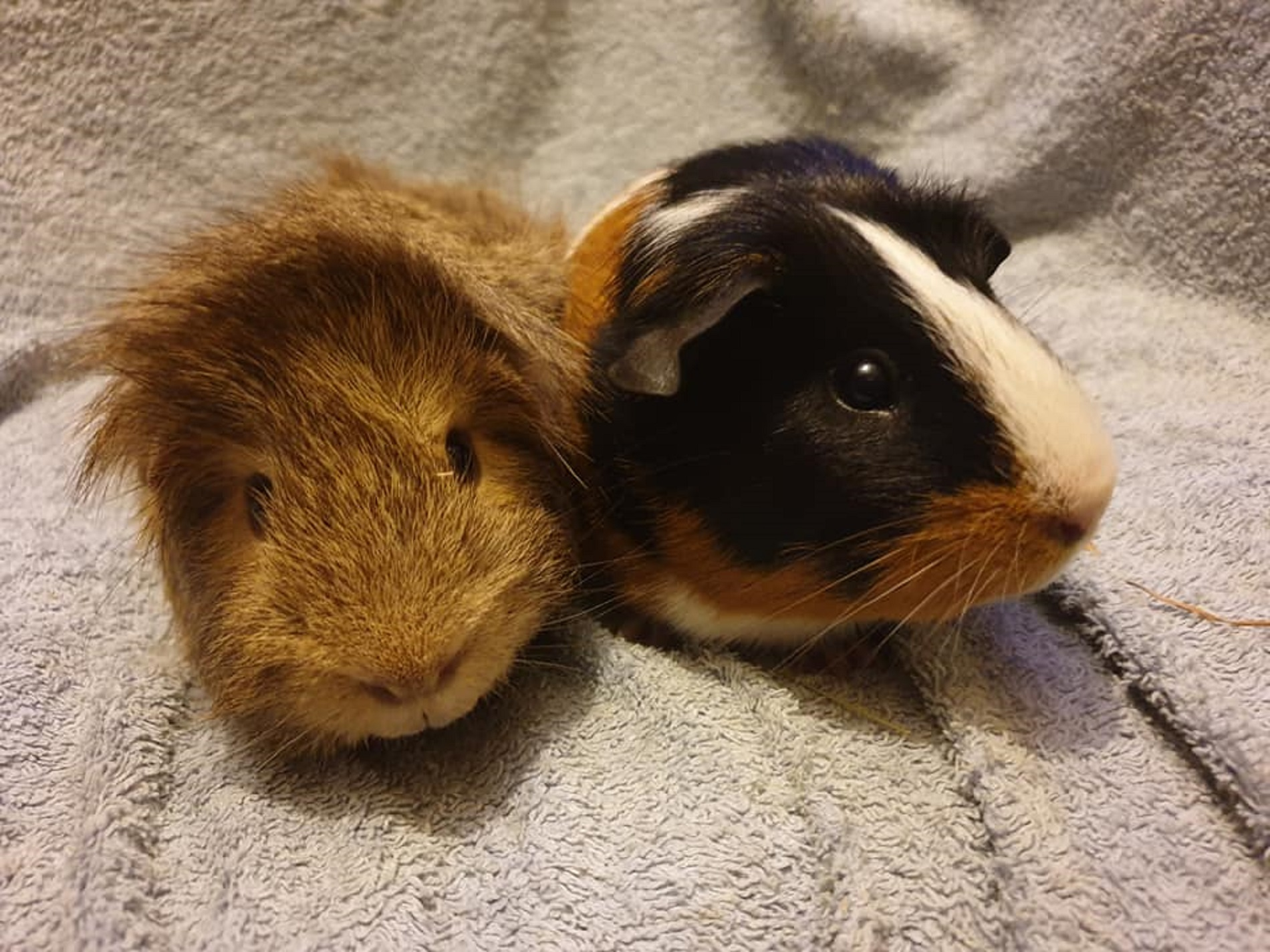 Charlie & Rocky October 27th 2019