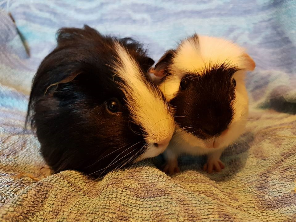 Flash & Peppa March 3rd 2018