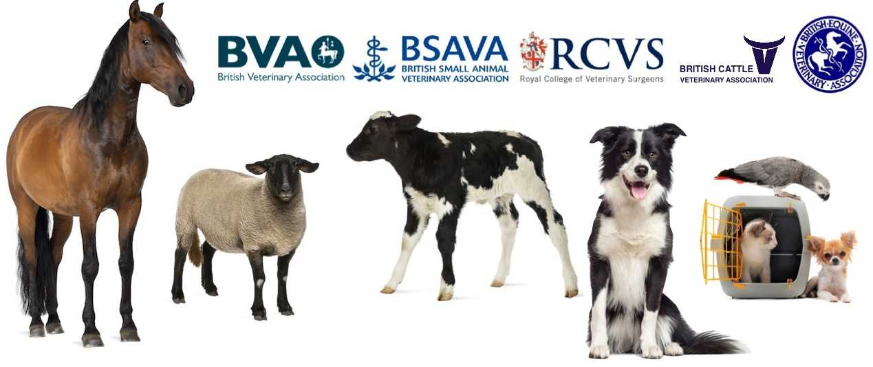 The Stewartry Veterinary Centre Castle Douglas offers a full range of veterinary services including pet care and farm vet services