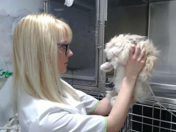 Aga Rybicka. Veterinaria en veterinarios Madrid