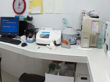 Veterinarios en Latina