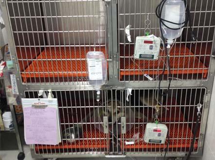hospitales veterinarios en madrid