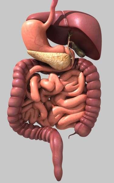 Aparato Digestivo Superior