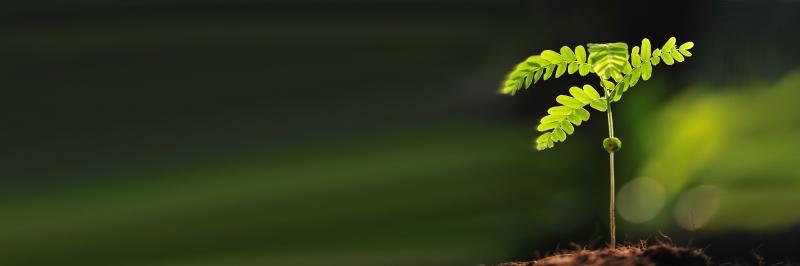plantera träd i regnskogen