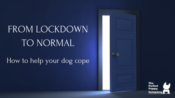 From Lockdown to Normal: how to help your dog cope
