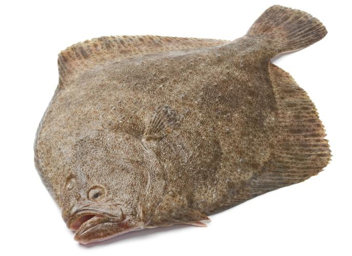 Fresh Turbot Fillets