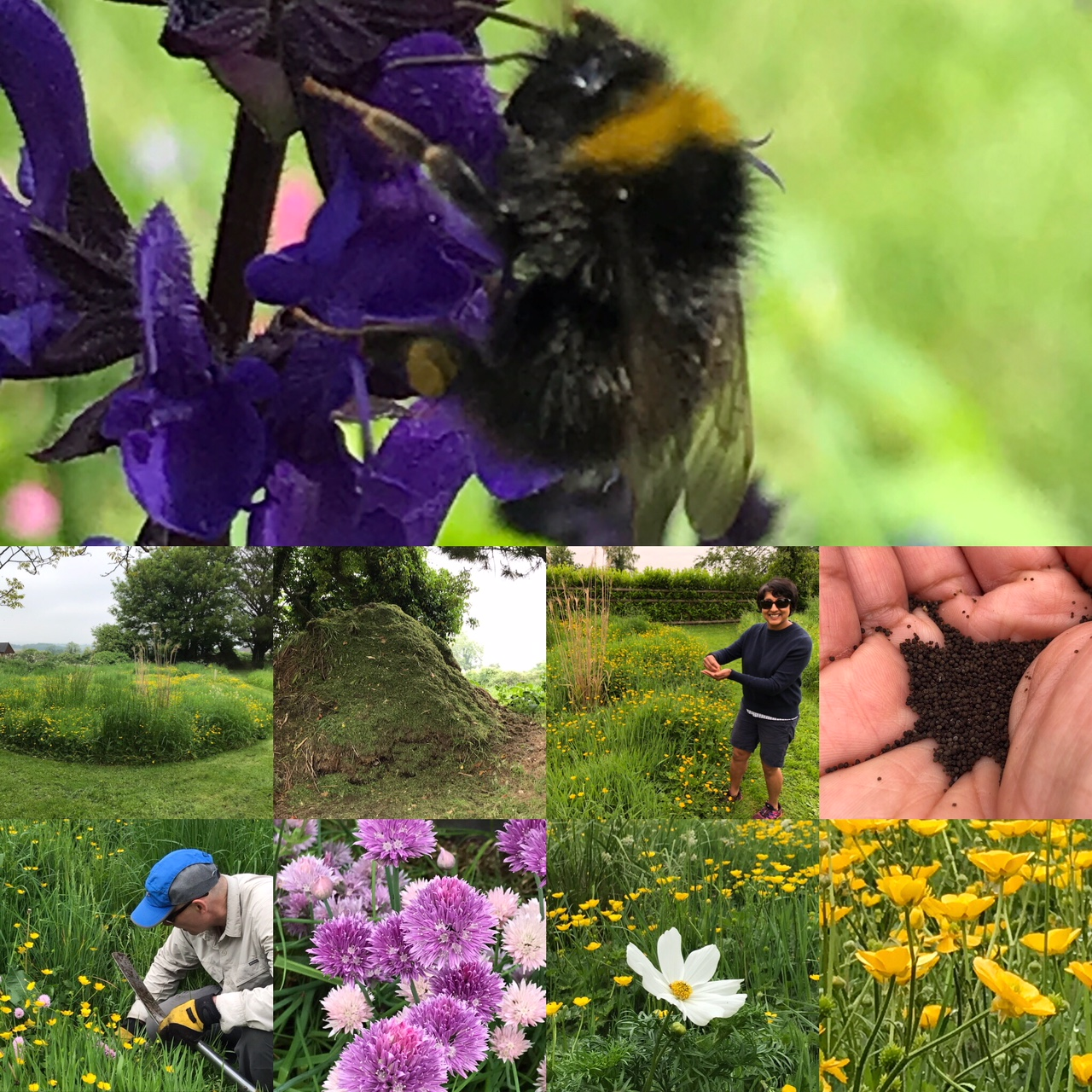 The importance of diversity of wildlife in food production - focus on bees
