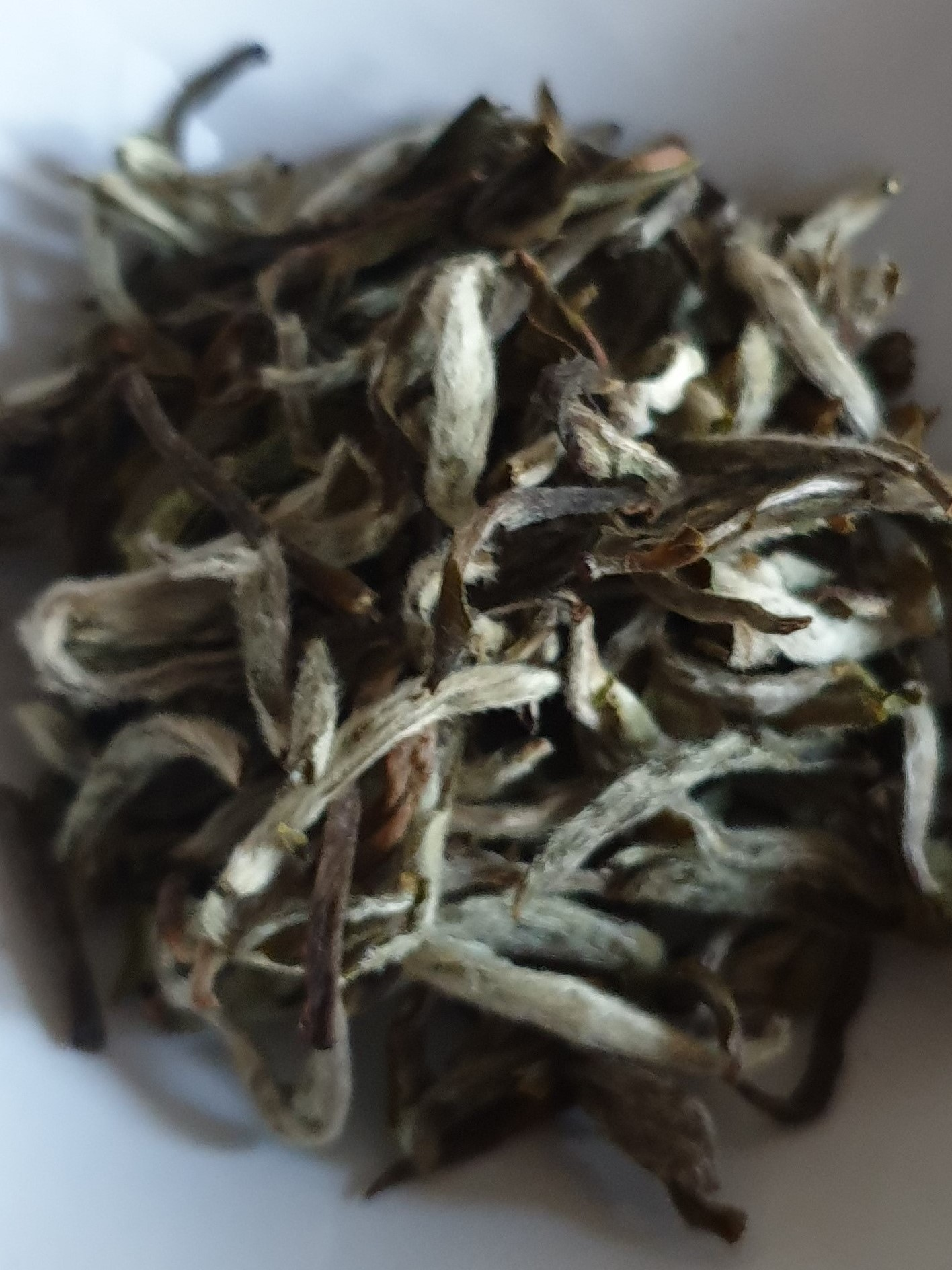 Badamtam, Moonlight White Tea First flush 2019
