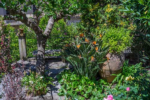 small Mediterranean garden with mixed planting and trees