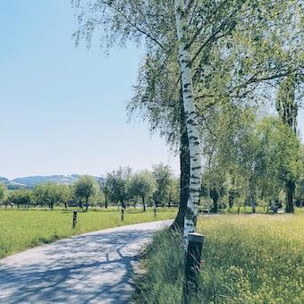 Altenrhein bicijpg