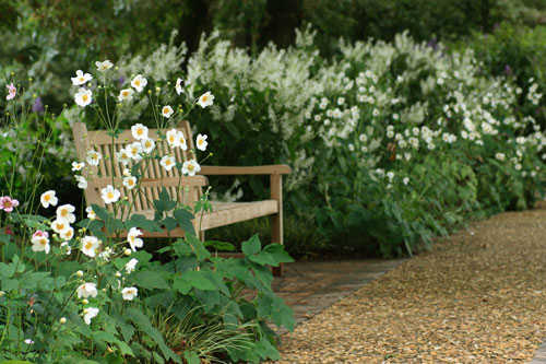 Bench surrounded by Anenomes