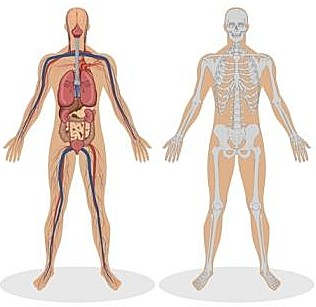 osteopathy,whole body,holistic diagnosis, joints, spine, back, muscles, aches and pains