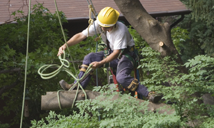 Mark's Tree Services - South East Michigan
