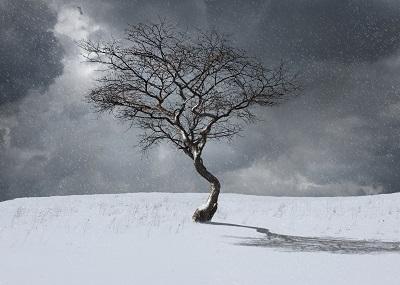 winter_treejpg