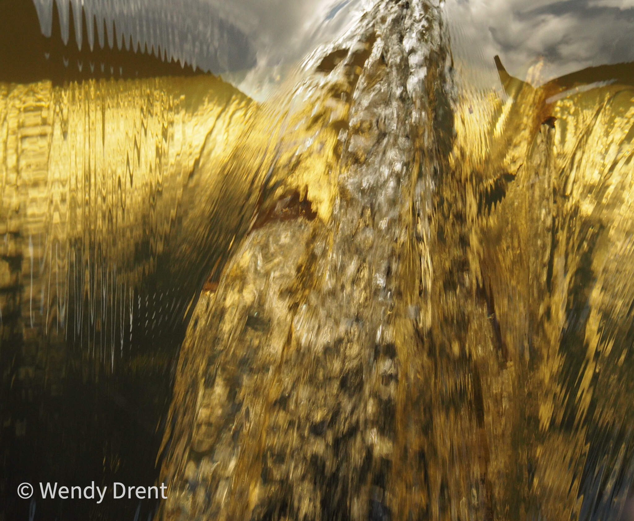 golden water, watermill, abstract, wendy drent,leudal, leumolen, naturephotography, limburg, netherlands