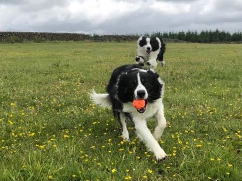 Eldrick Kennels and Cattery Barrhill near Newton Stewart
