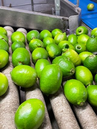 Limoni interdonatojpeg