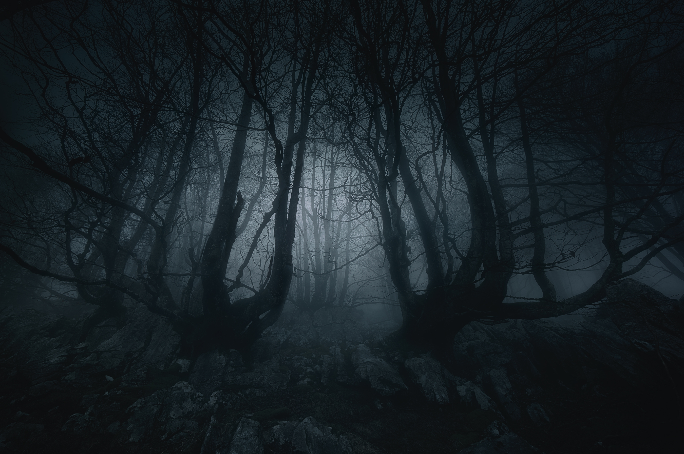 079713130-nightmare-forest-creepy-treesjpeg