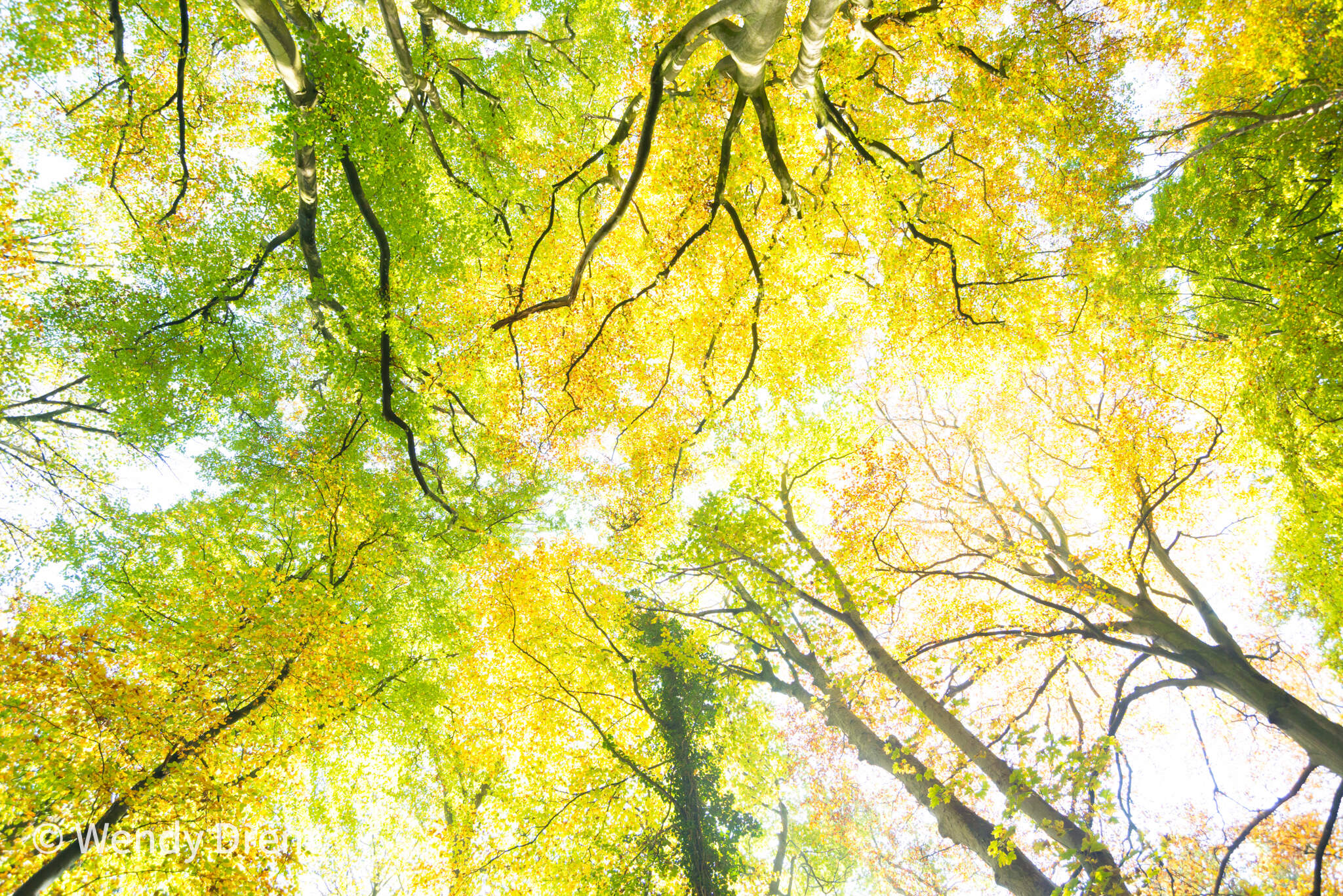 wendy drent, autumn, tree, forest, green and yellow, landscape, wendy drent.com