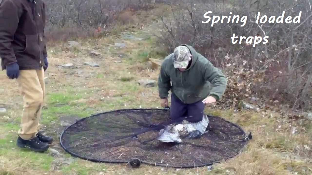 spring loaded traps