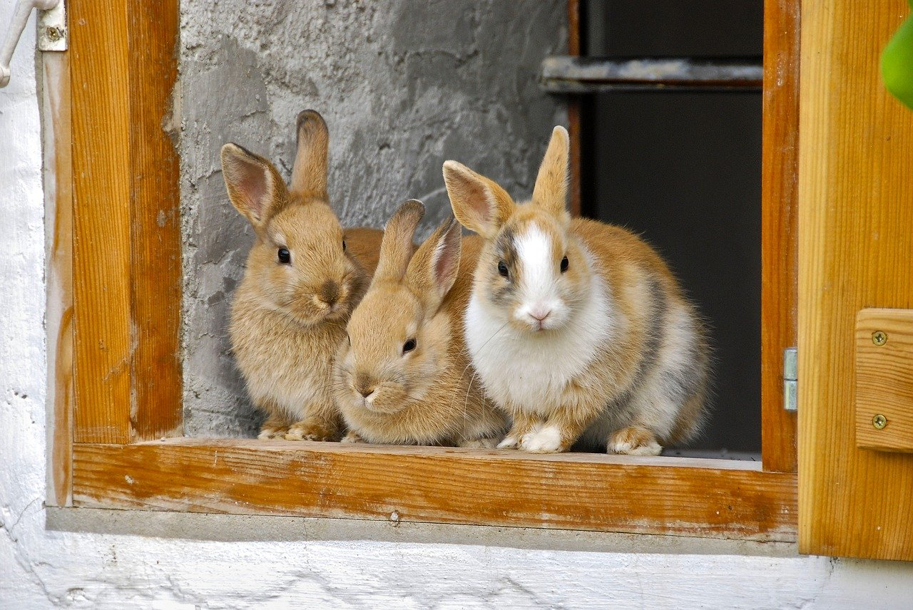 Thinking of Getting a Rabbit? Here's What You Should Know!