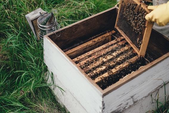trattamento delle api biojpg