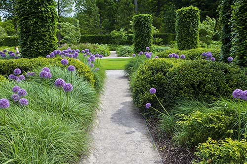 Formal garden with structured alliums and grasses